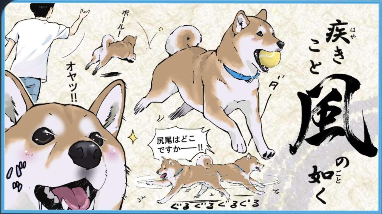 """風林火山、これぞ柴犬の如し(笑) """"柴犬あるある""""を表現したイラストに多くの共感の声"""