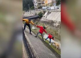 水路に落ちてしまった野良犬を連携プレーで救出!しかし、救助していた男性の一人が・・・