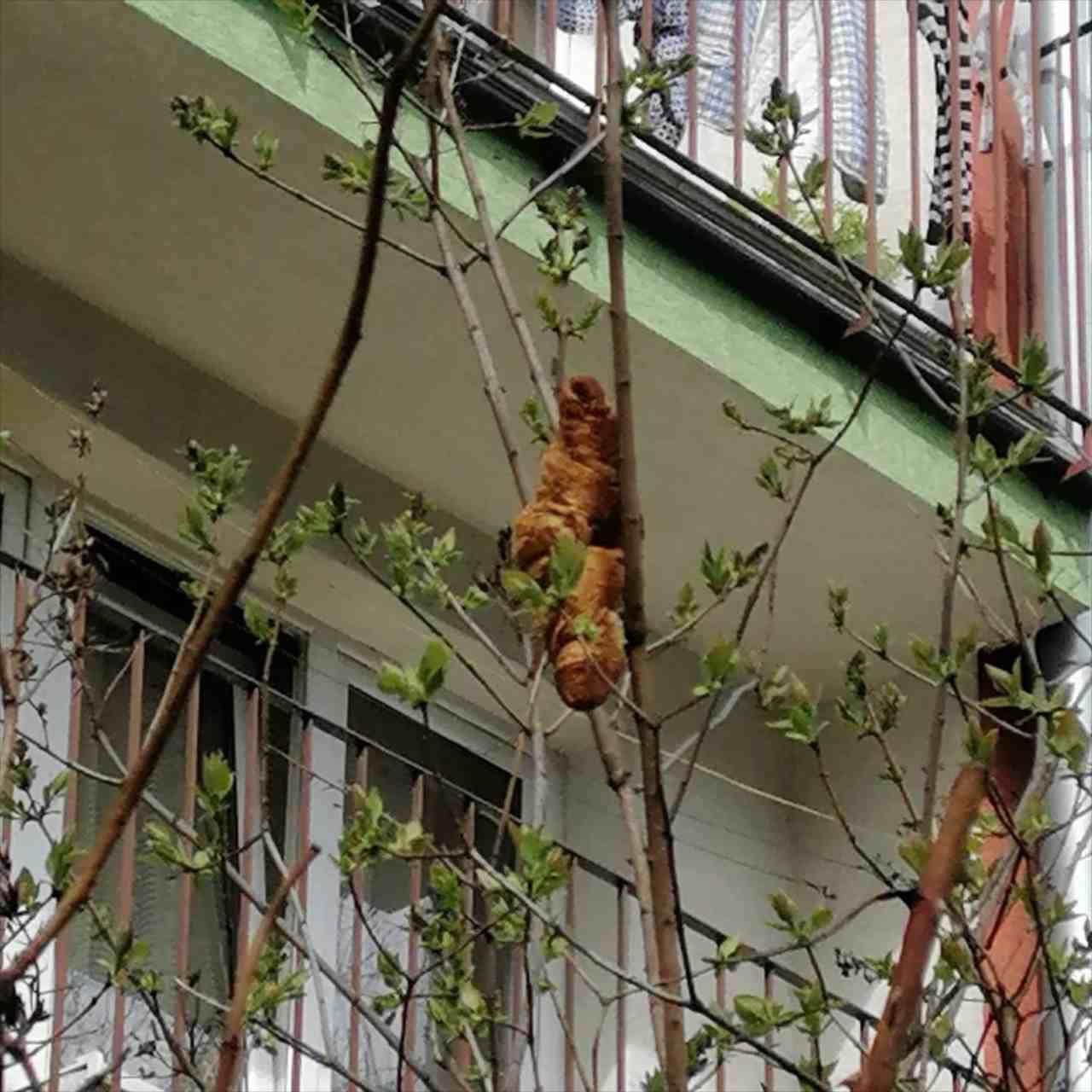 「木の上に謎の生物がいる!」と通報を受けて駆けつけると、正体はまさかのアレだった!