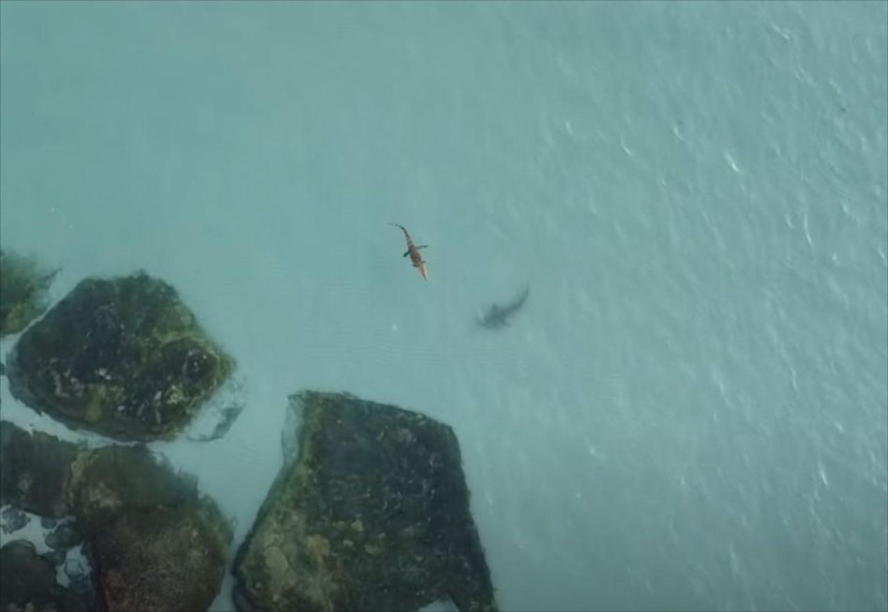 【迫真の映像】ワニを捕食しようと2分間にわたってつきまとうサメ!必死に逃げるワニはどうなった!?