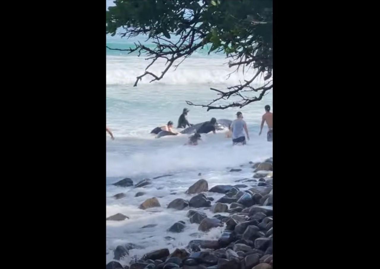 【感動の救出劇】座礁していたジンベイザメの赤ちゃんを救うため、周囲の人々が立ち上がった!