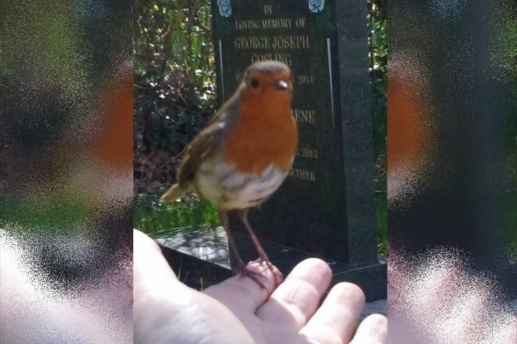 【感動の実話】亡くなった息子が鳥になってママに会いに来てくれた!