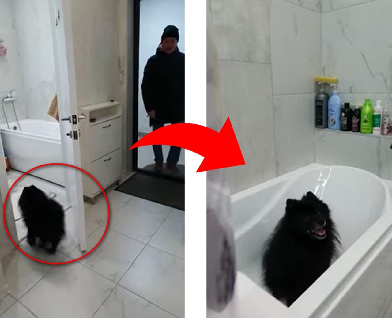 今こそ人間も見習うべき!帰宅後の手洗いルーティンが完璧すぎるワンコがかわいい