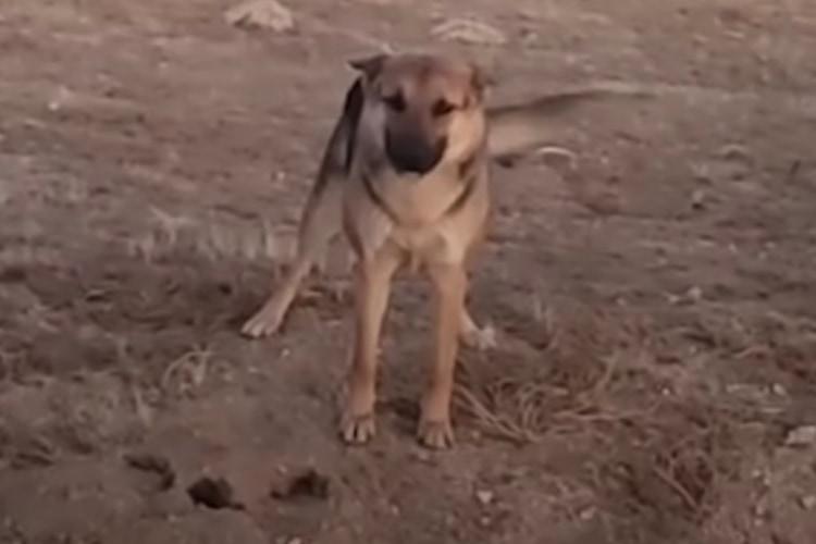 【感動】砂漠で暮らす野良犬と、その子を保護するために毎日足を運んだ女性の物語