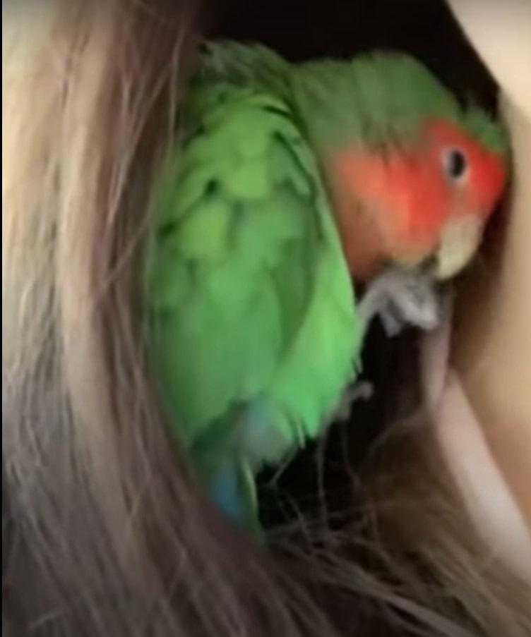 気付きました?おネムな鳥さんが寝床にしようとしていたの、実は・・・