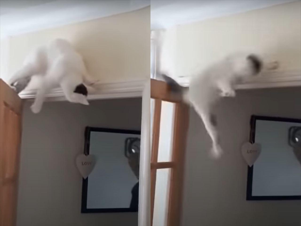 ドアの上に乗ったはいいけれど・・・身動き取れなくなった猫ちゃんの運命は?