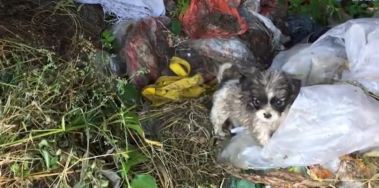ゴミ捨て場で見つかった子犬。その半年後の姿に涙必至