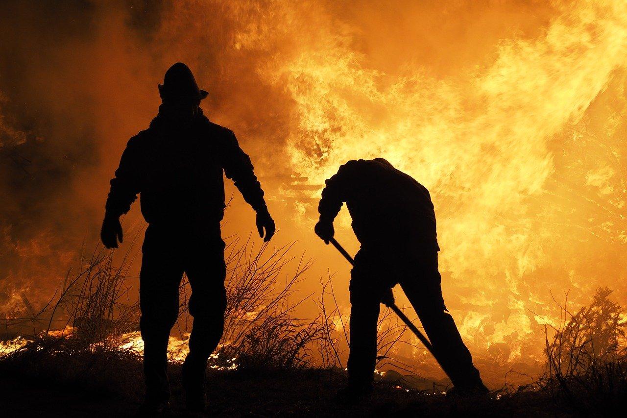 火事でビルに取り残された?!絶対絶命に晒されたニャンコがとった驚愕の行動とは!?