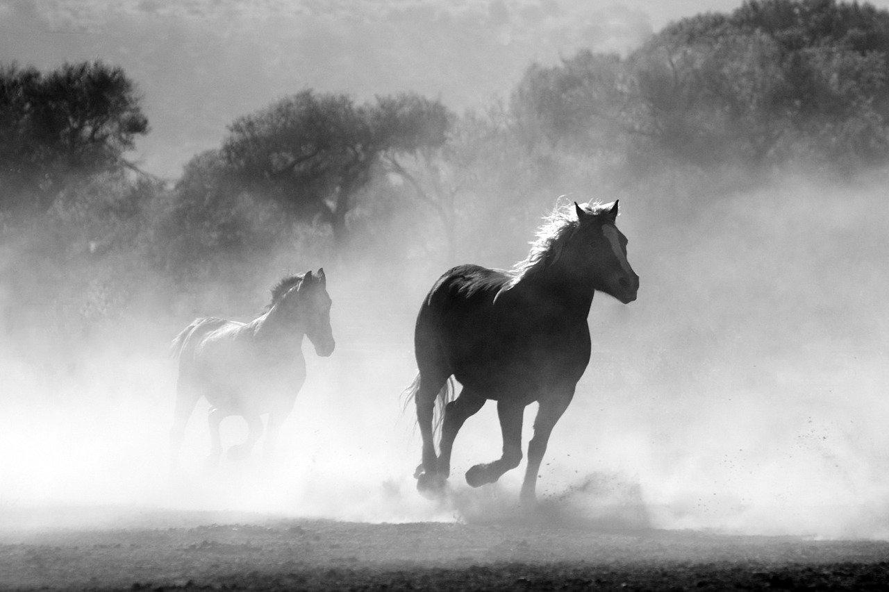 座右の銘にもされる「人間万事塞翁が馬」。この言葉の意味は?その成り立ちにはどんな物語があるの?