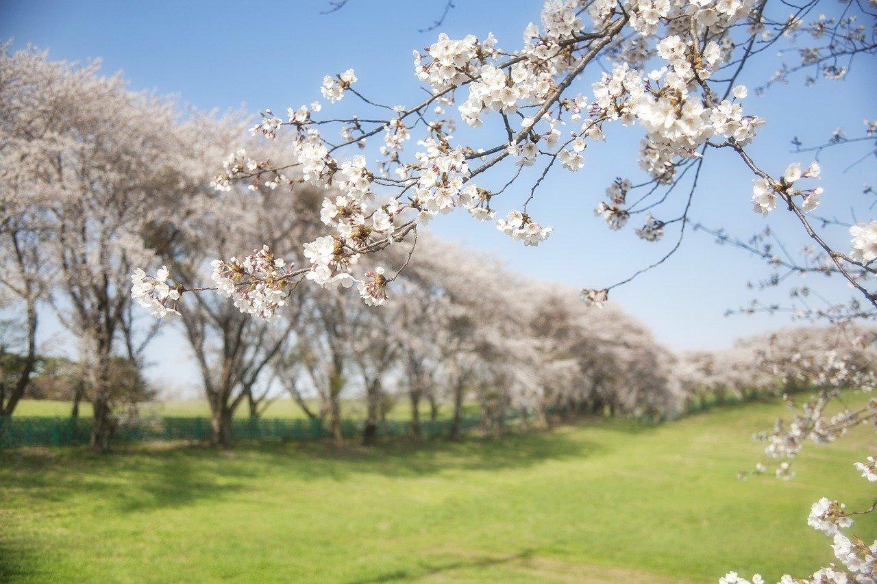 「春爛漫」とはどんな気候?爛漫とはどういう意味のことば?