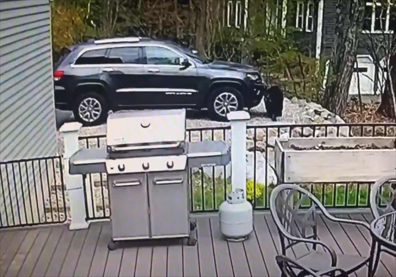 【衝撃の映像】この車のオーナーですか?クマたちの行動がまるでドライブに行こうとする人間のよう