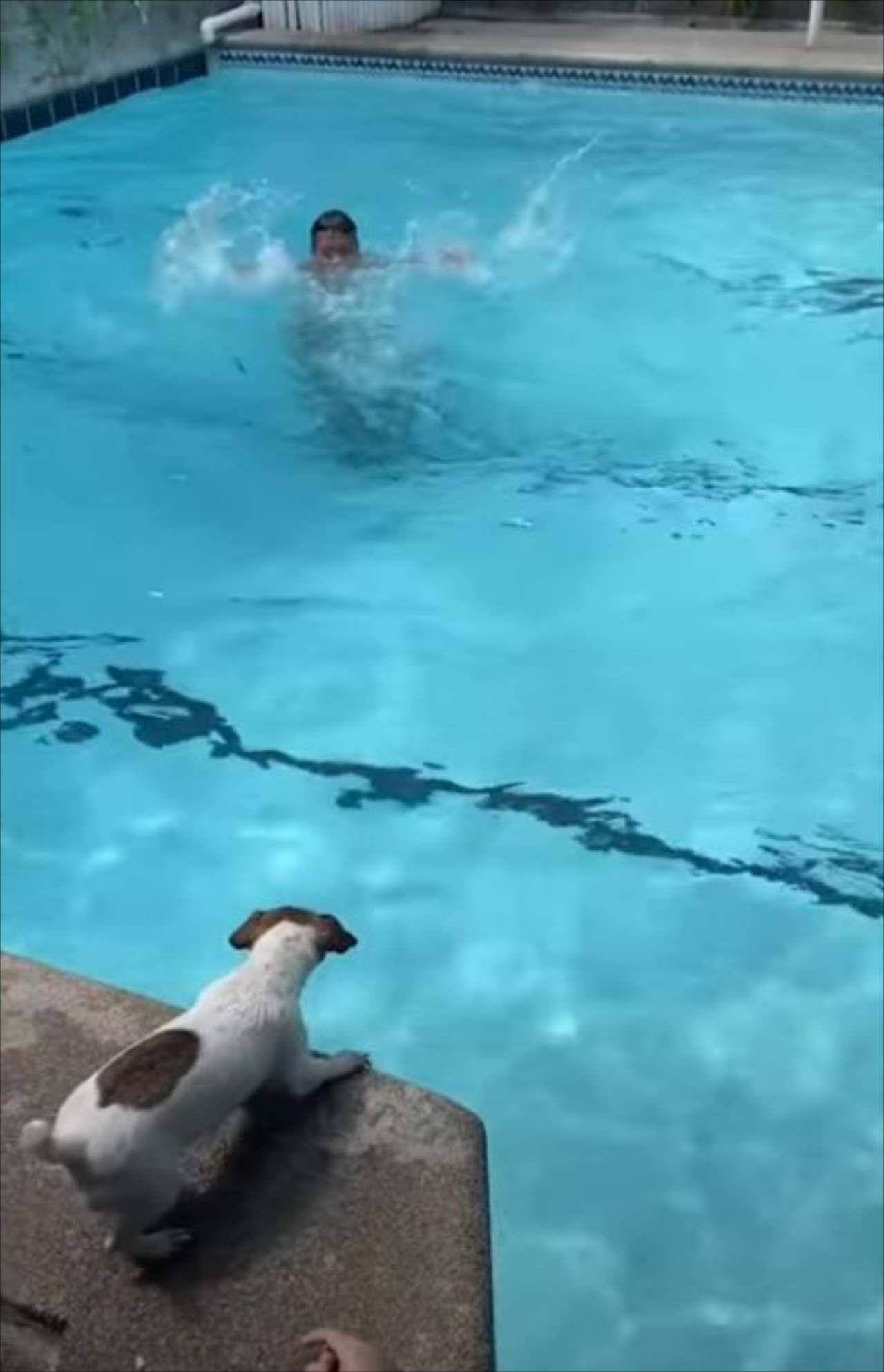 【感動】助けるんだワン!プールで溺れている飼い主さんを救助するため、ワンコがとった行動とは?!