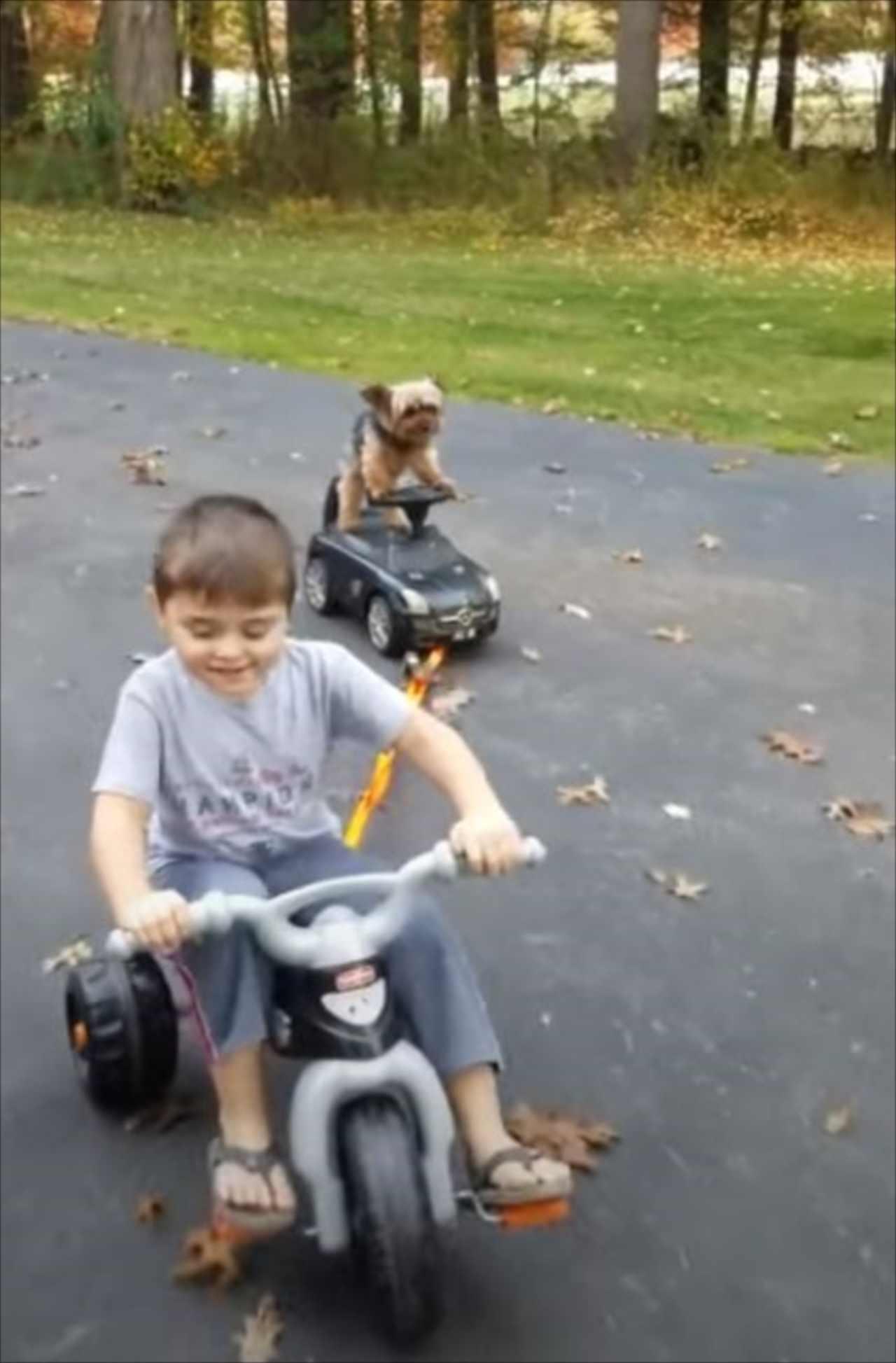 楽しいんだワン♪子どもにけん引されてオモチャの車を乗りこなすワンコがかわいすぎる!