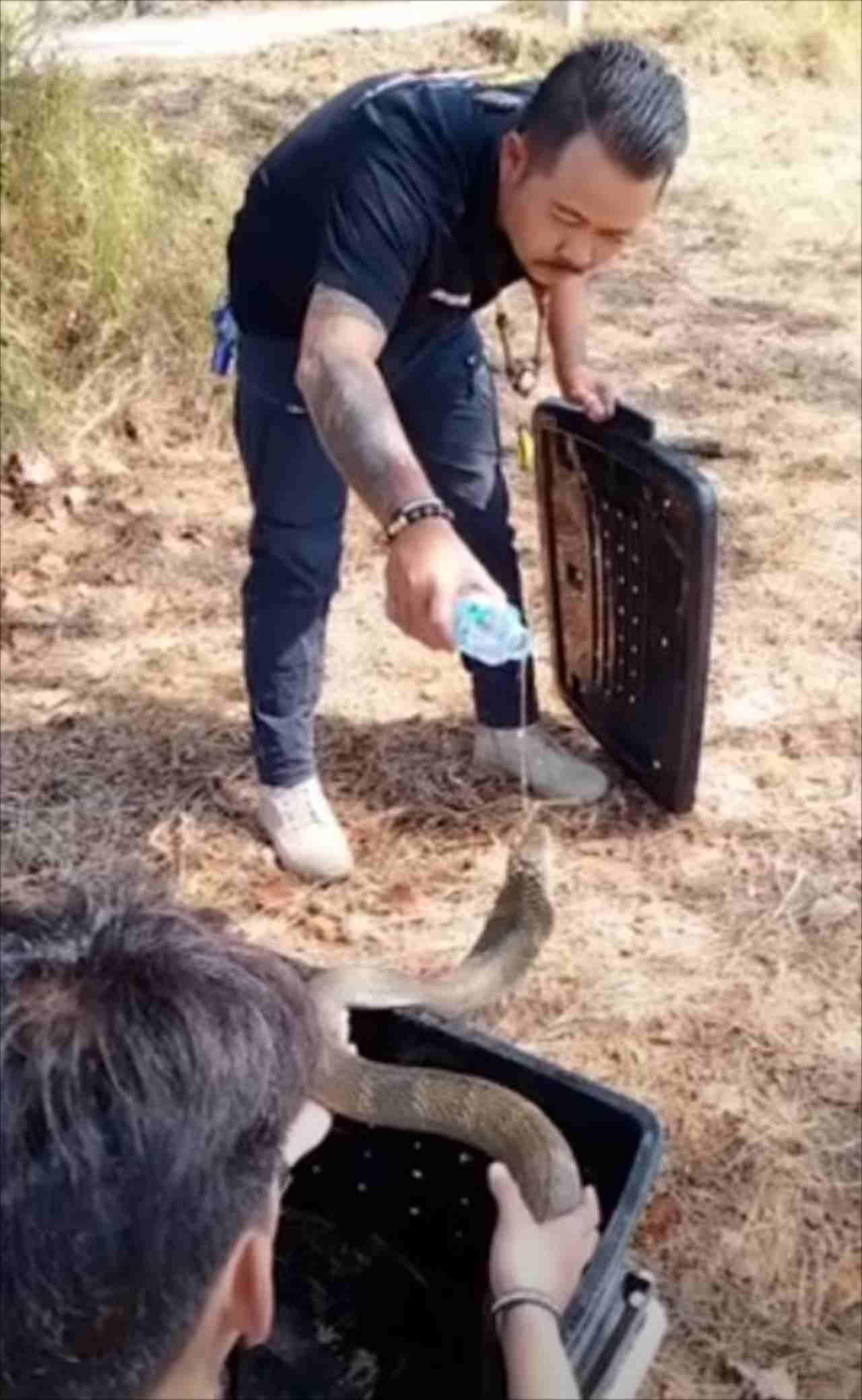【やさしい世界】住宅街で捕獲されたキングコブラ。野生に戻す前の救助隊の行動に感動