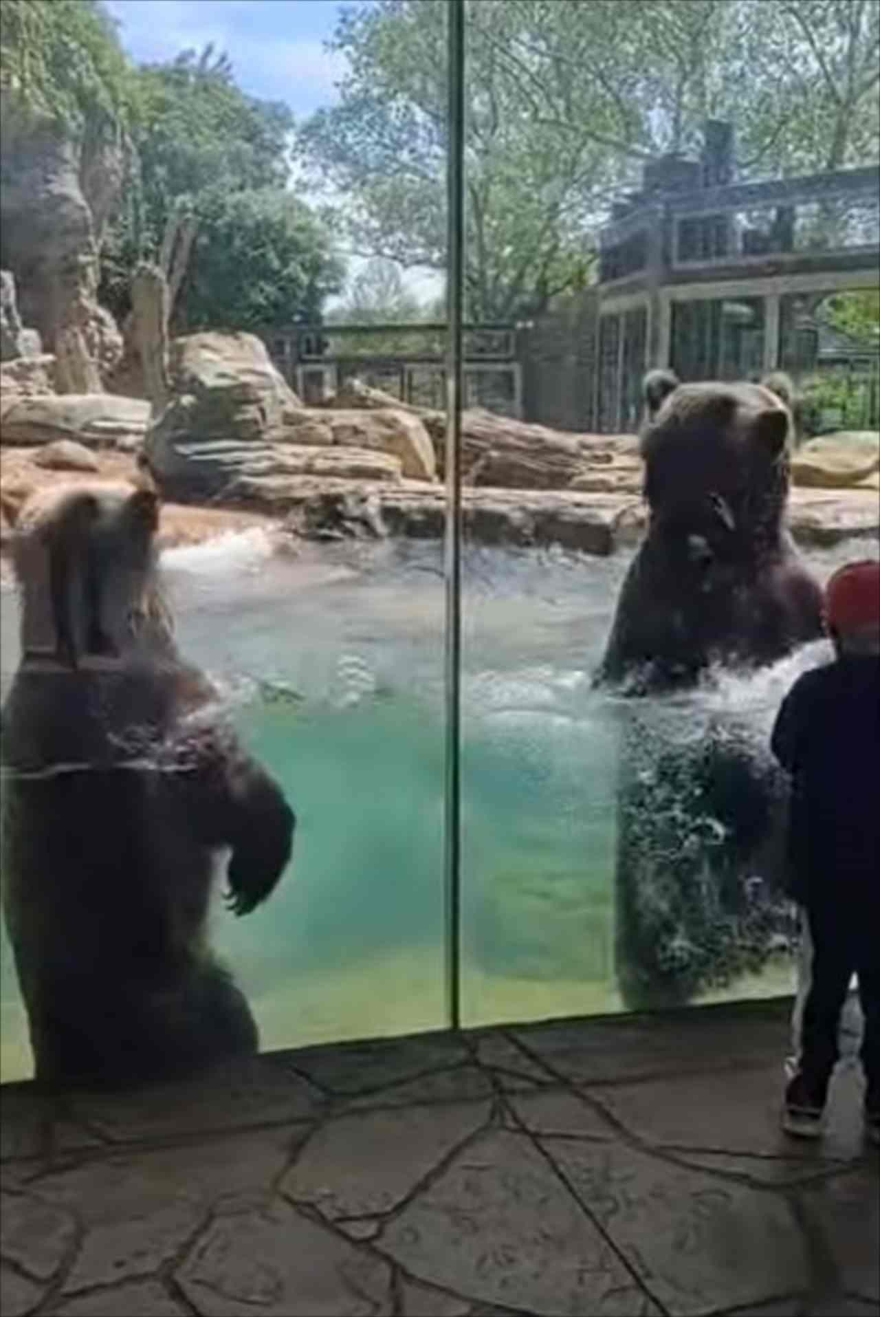 波を立てながら陽気に踊るクマたちが楽しそう♪伸び上がると・・・やっぱりデカい!