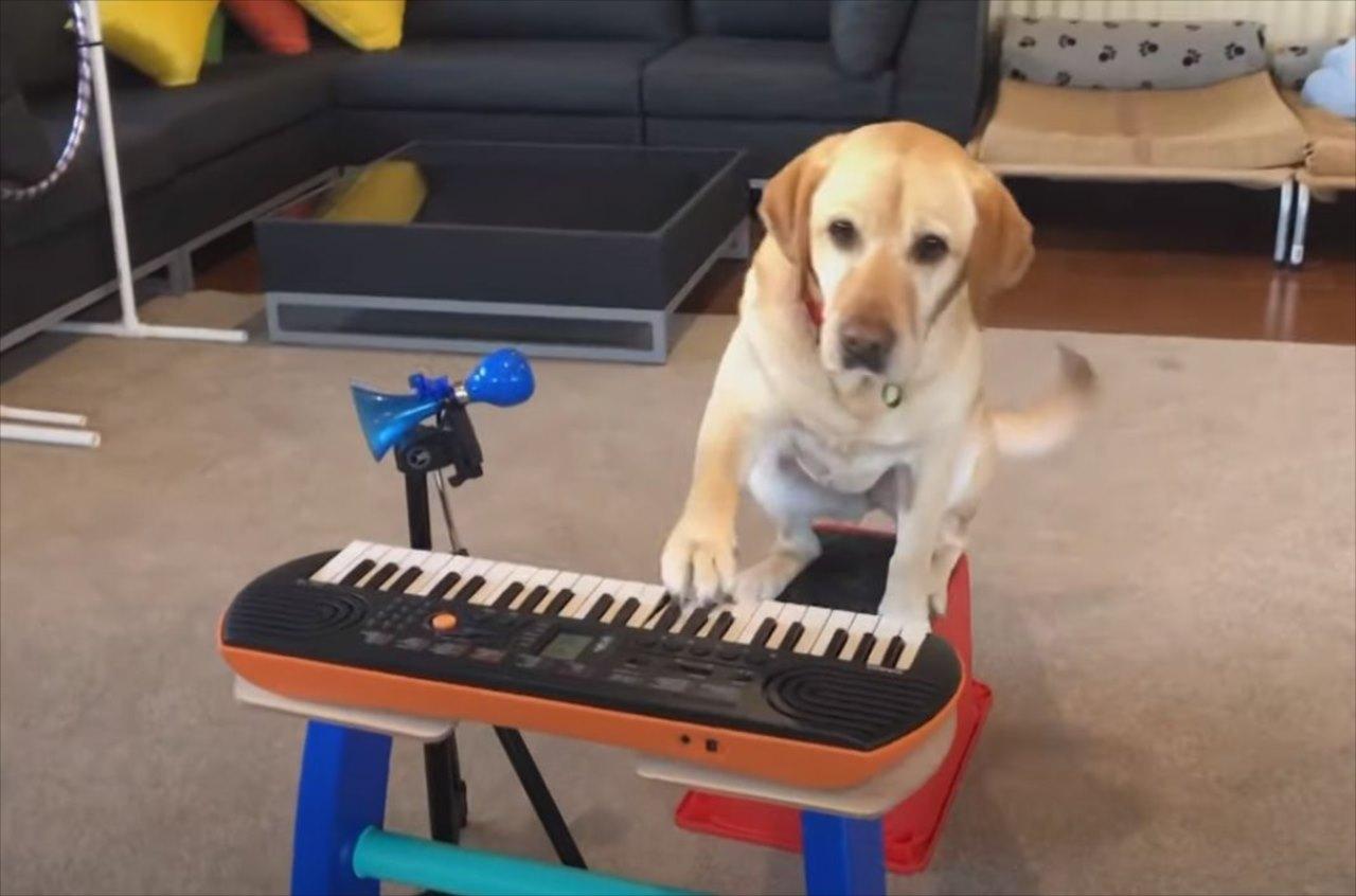 もしや天才ミュージシャン?!さまざまな楽器を巧みに演奏するワンコが話題に!