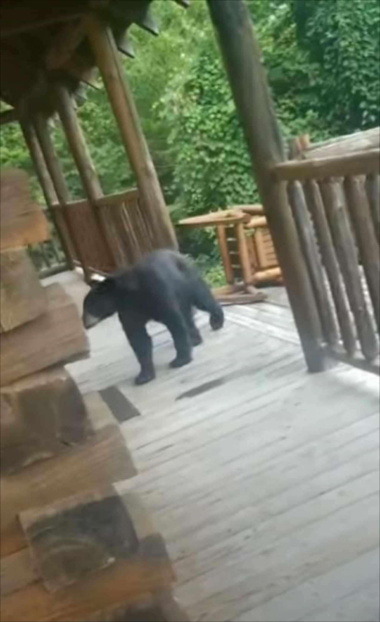 目の前にクマがあらわれた!襲いかかって来る・・・と思いきや、驚きの行動に!