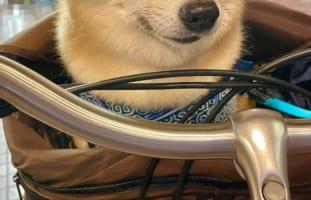 【お察しください】楽しいサイクリングだと思っていたのに・・・全てを物語るペットサロン帰りのその表情・・・