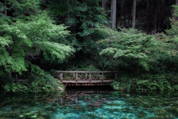 まるで絵画の世界!岐阜県の名所「モネの池」で撮影された写真が神秘的で美しすぎる!