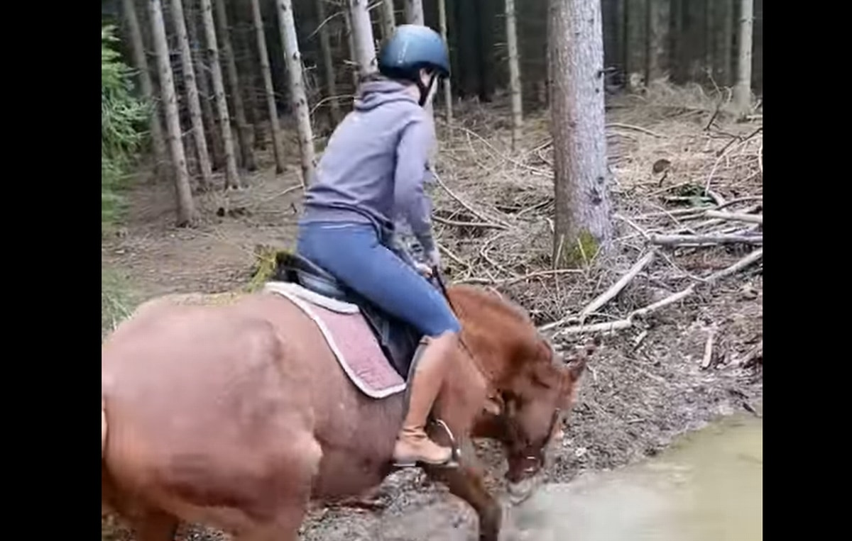 悪路に差し掛かったお馬さん・・・つい水たまりが楽しくなり、人が背中にいる事を忘れてしまったようです