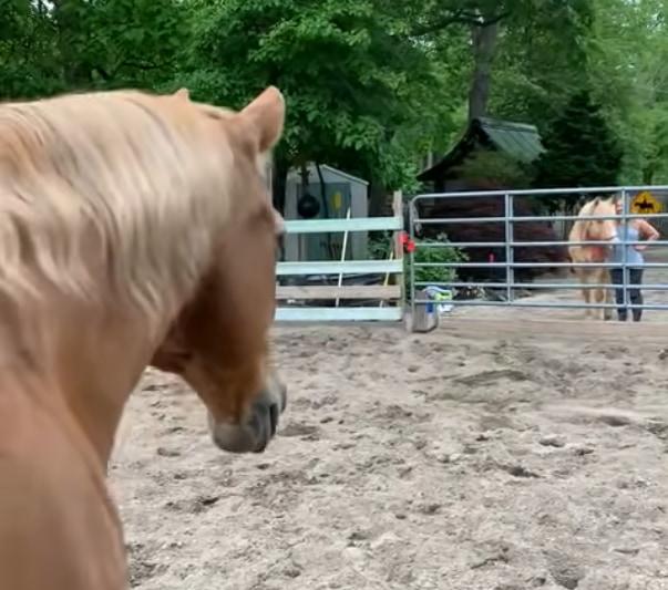 「朋あり遠方より来る、また楽しからずや」これは馬の世界でも通じるようです