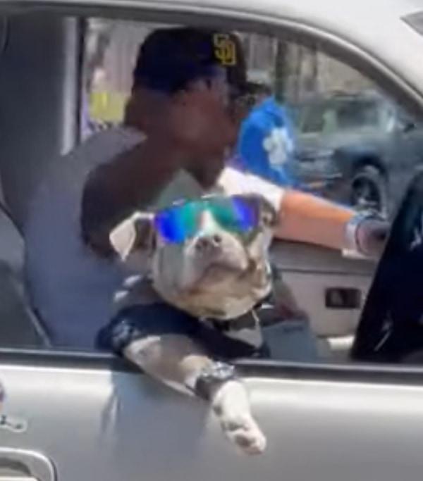 サングラスをして車の窓から身を乗り出すイカすワンコ。サービスも旺盛!