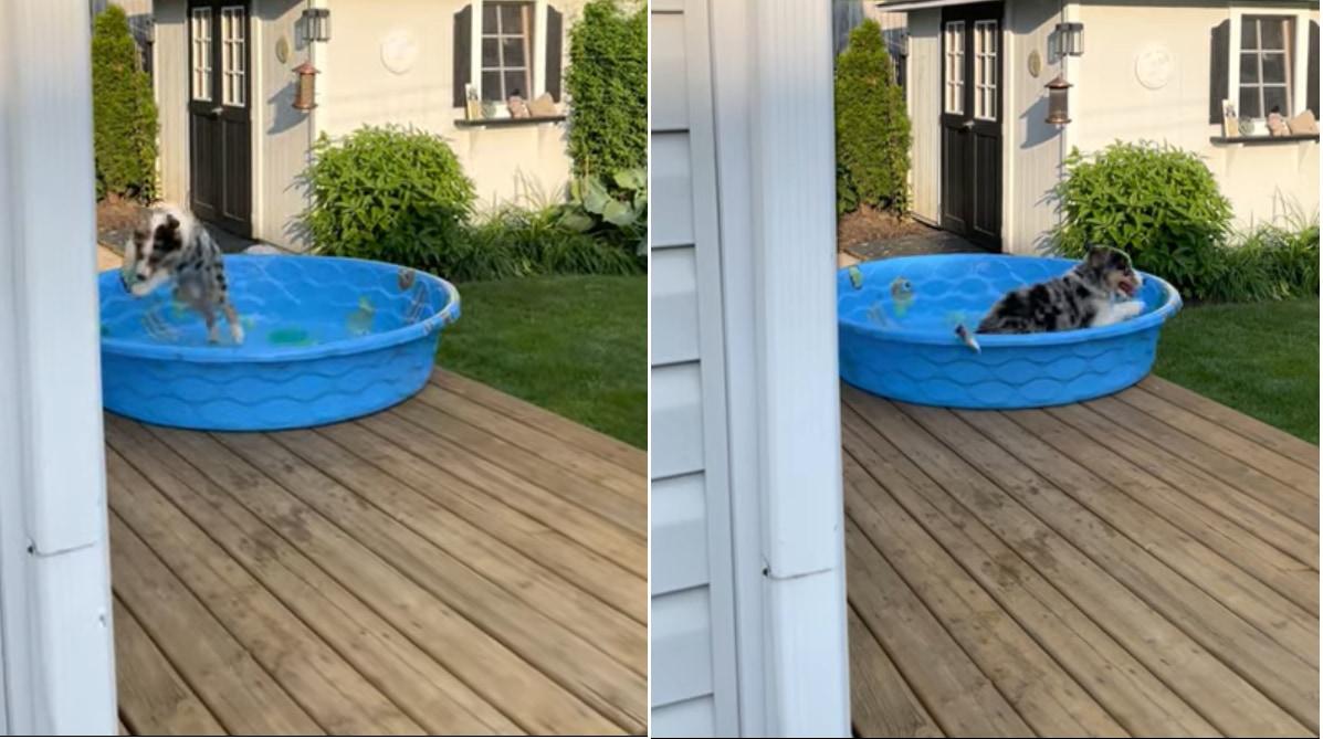 「わ~い!楽しい~!!」プールではしゃぐワンコ。・・・だけどそのプール何か足りなくない?