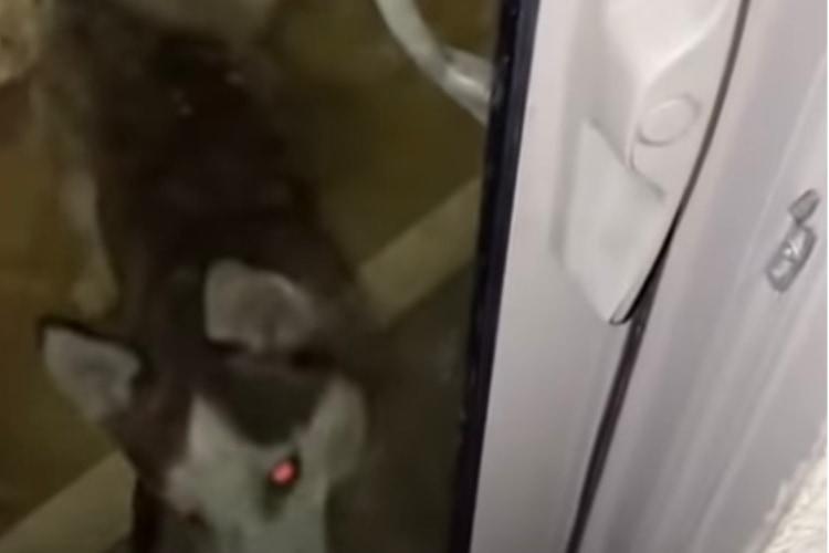【珍事】愛犬に鍵を閉められてベランダに締め出された!焦る飼い主に、まさかの奇跡が!
