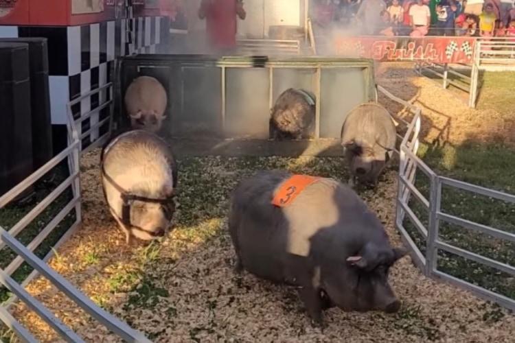 豚さんレースが超まったり展開かと思いきや・・・まさかの緊迫したデッドヒートに!!