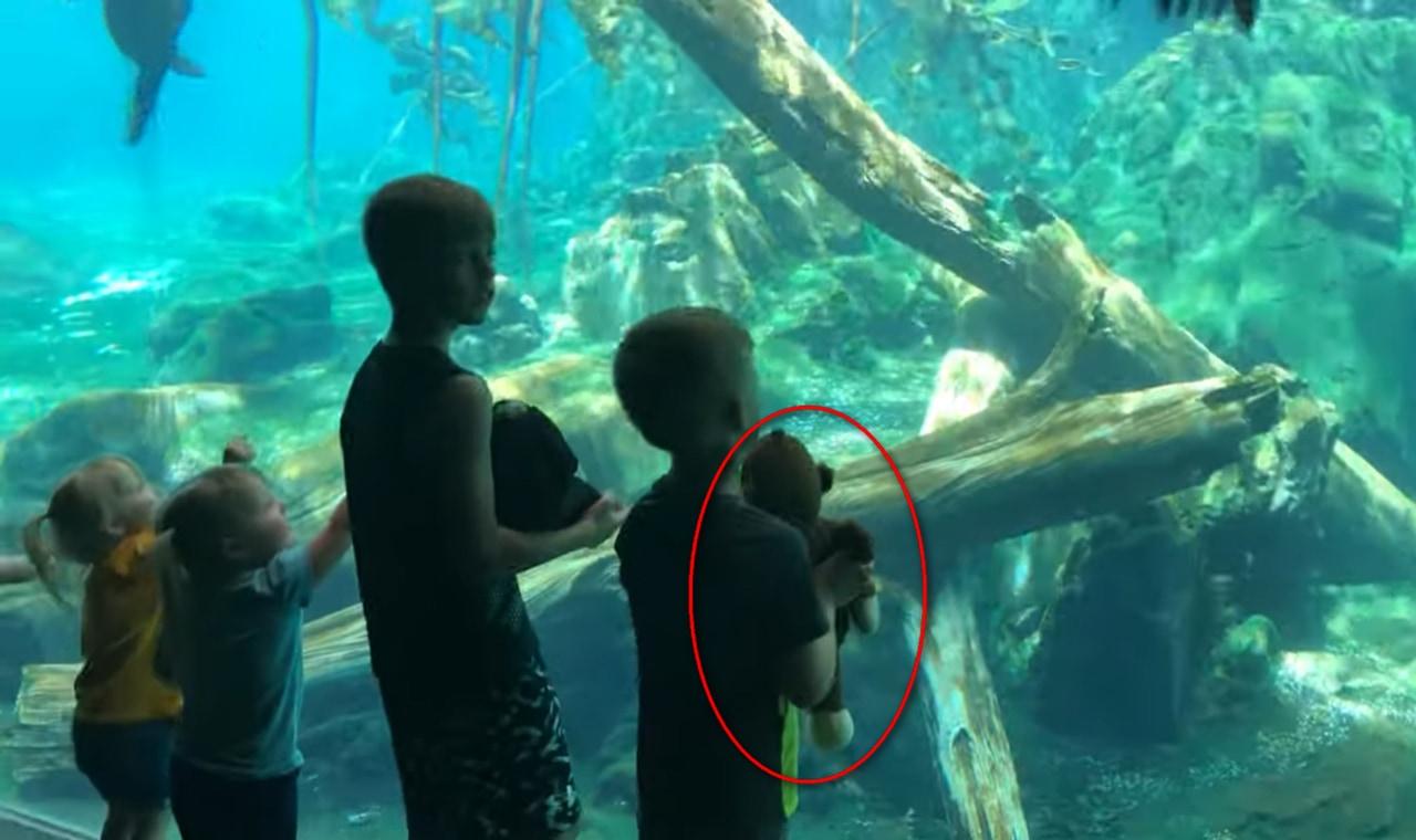 「それ楽しいの?」水族館のアシカが、人間の子どものオモチャに興味深々!!