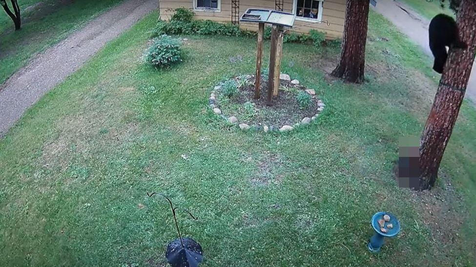 「こわいよ~!」庭にあらわれたクマ。『ある存在』にビビって木の上に一気に駆けのぼる