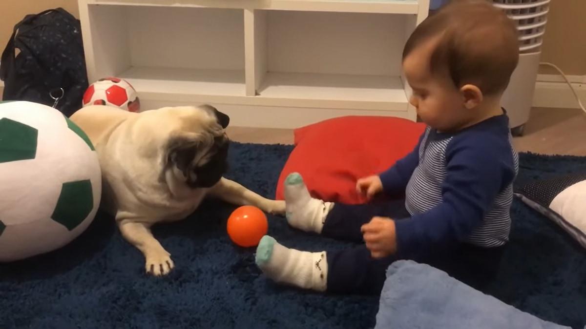 「そのボールが欲しいの!」赤ちゃんのボール遊びを見ていたワンコ、とうとう我慢できなくなり・・・
