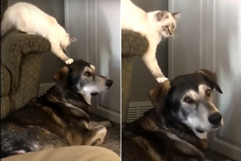 バレないように頭をトントンしたいニャンコと気づかないフリして飼い主に目で訴える優しいワンコ