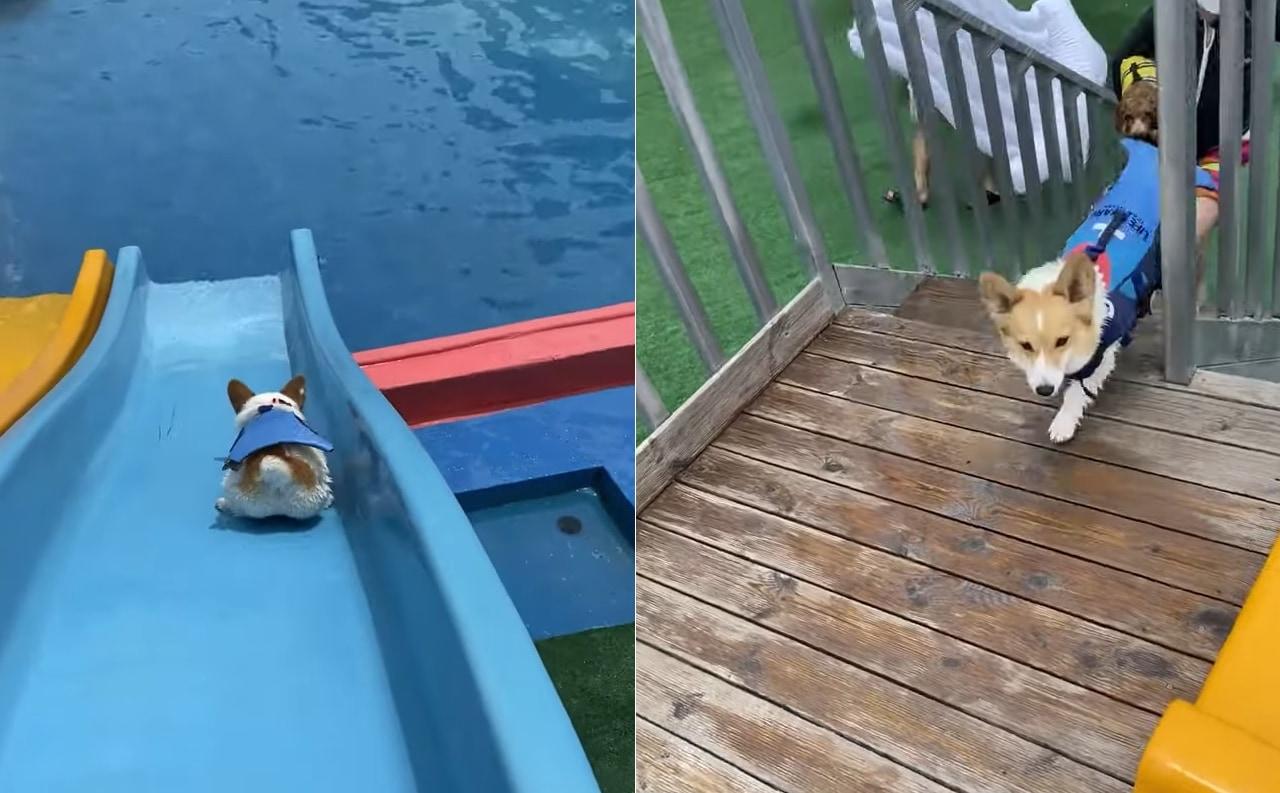 「うひょ~~!」滑り台と泳ぐのが大好きなワンコは、最高の遊び場を見付けたようです