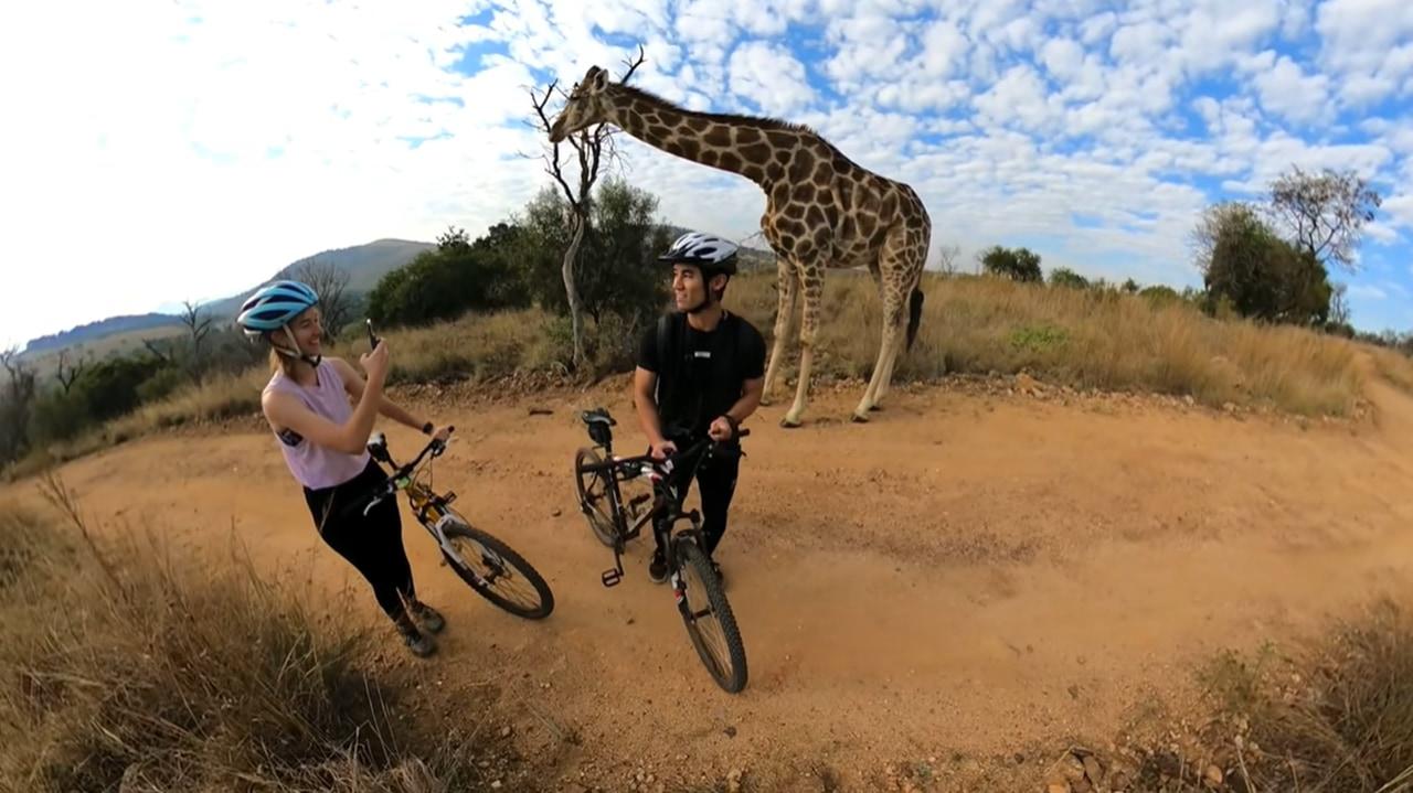 サイクリング中にキリンと遭遇!?キリンが迫る姿が息を飲む壮大な映像でスゴい