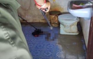 自宅のトイレに行ったら『トンデモナイ』生物が侵入していた!無事に捕獲なるか!?