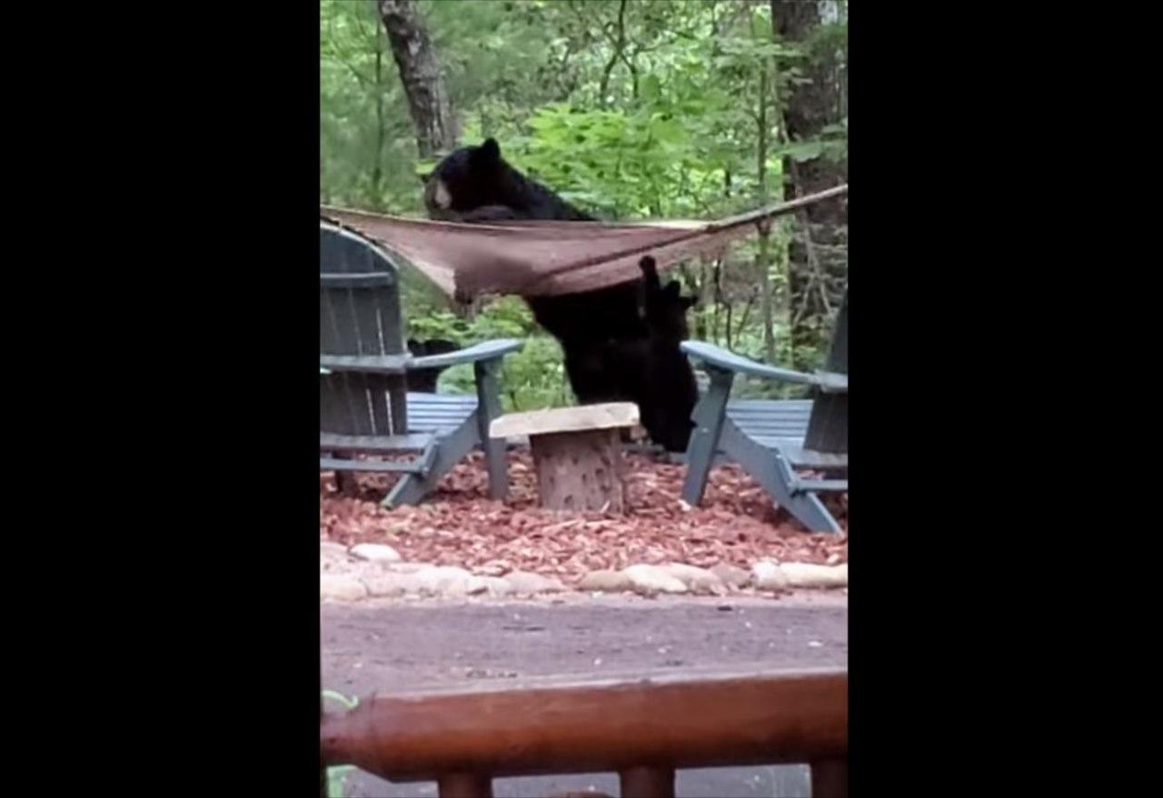 ハンモックで横になりたいクマの親子。しかし、なかなかうまく乗れずてんやわんや!!