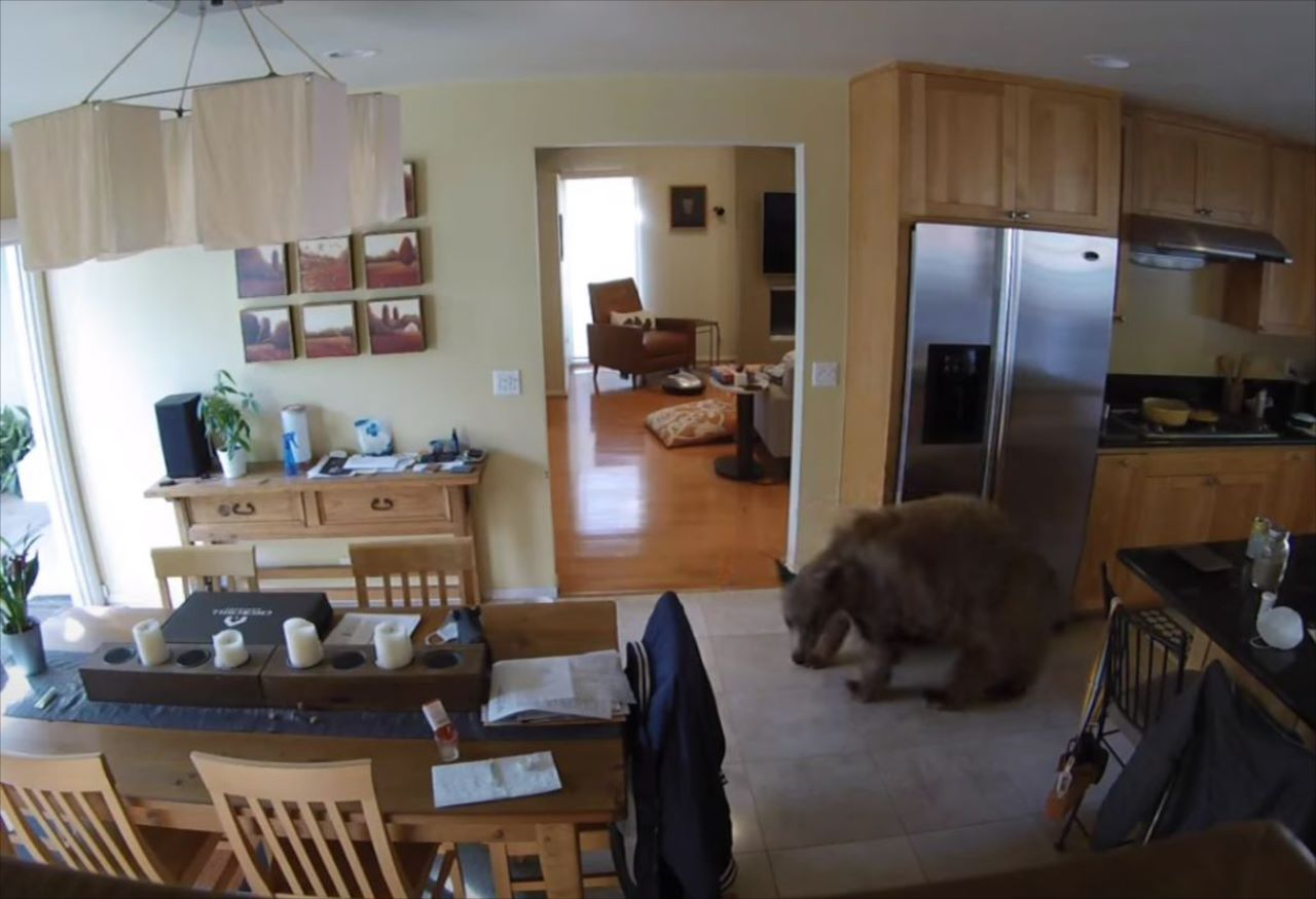 家の中まで侵入してきたのは巨大クマ!?果敢にも立ち向かい撃退したワンコたちの勇姿をご覧ください