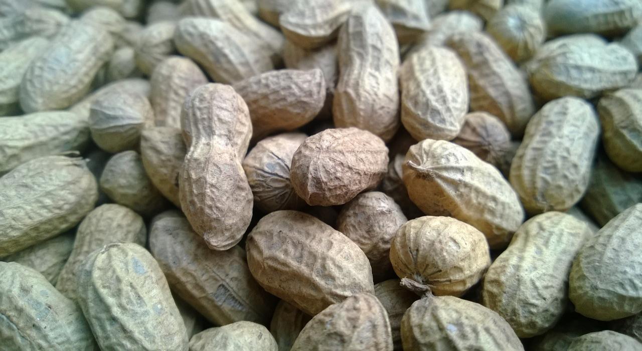 「落花生」と「ピーナッツ」は同じものなのになぜ違う呼び名があるの?実は○○で名前が使い分けられていた!