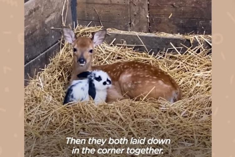 【赤ちゃんたちの友情物語】ひとりぼっちだった子鹿ちゃんは、子ウサギちゃんと友達になりました!