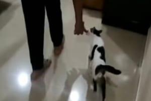 「こっちに来てニャ」我が子を飼い主さんの家族にお披露目したいニャンコが、赤ちゃんの場所へ案内してくれました!