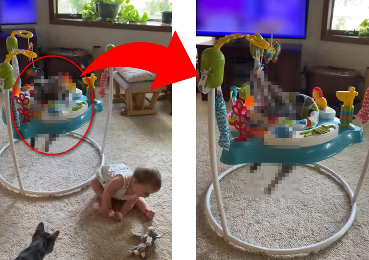 赤ちゃん用に購入したジャンパルー。しかし、これを一番喜んだのは赤ちゃんではなかったようです