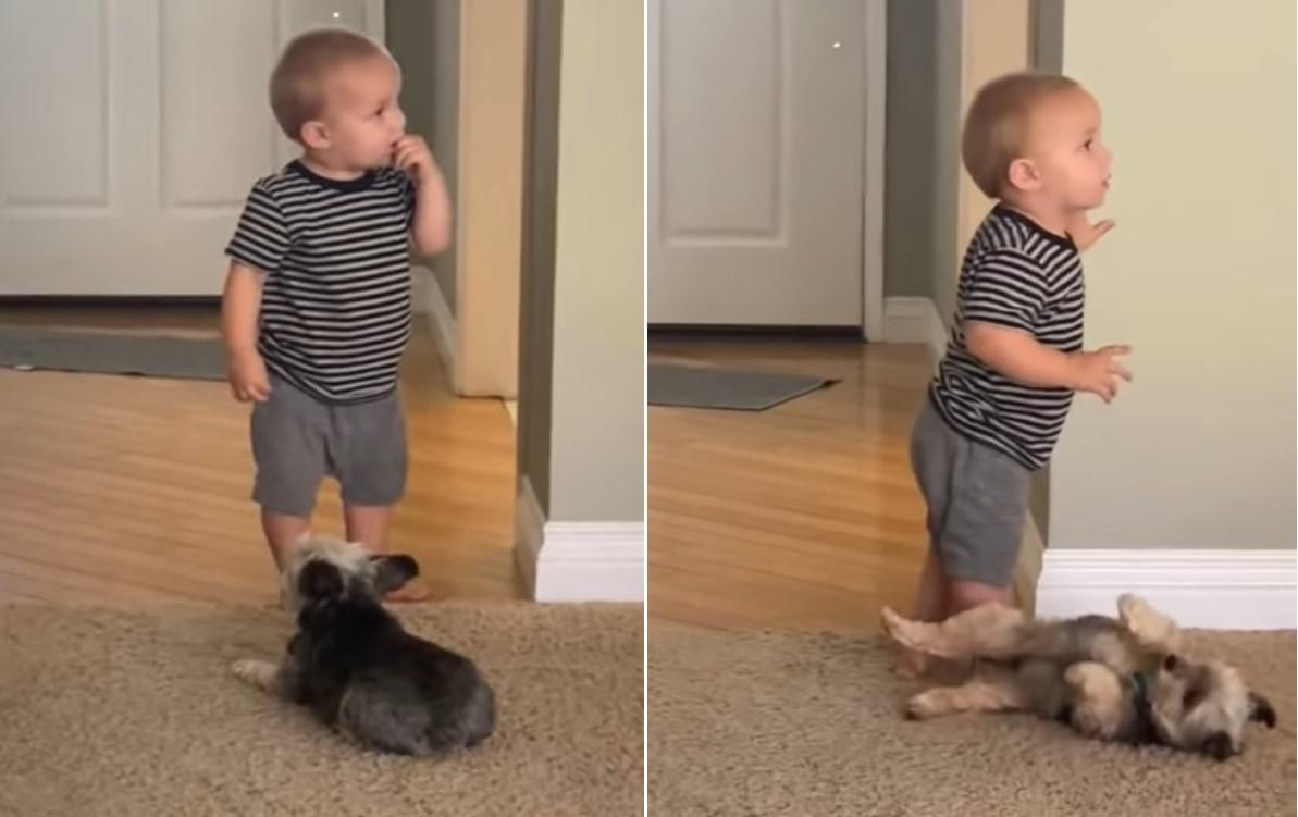 「ねえねえ、おなかナデナデして!」と仰向けになる子犬と、何かに夢中でワンコが視界にも入っていない赤ちゃんによるかわいくも切ないすれ違い