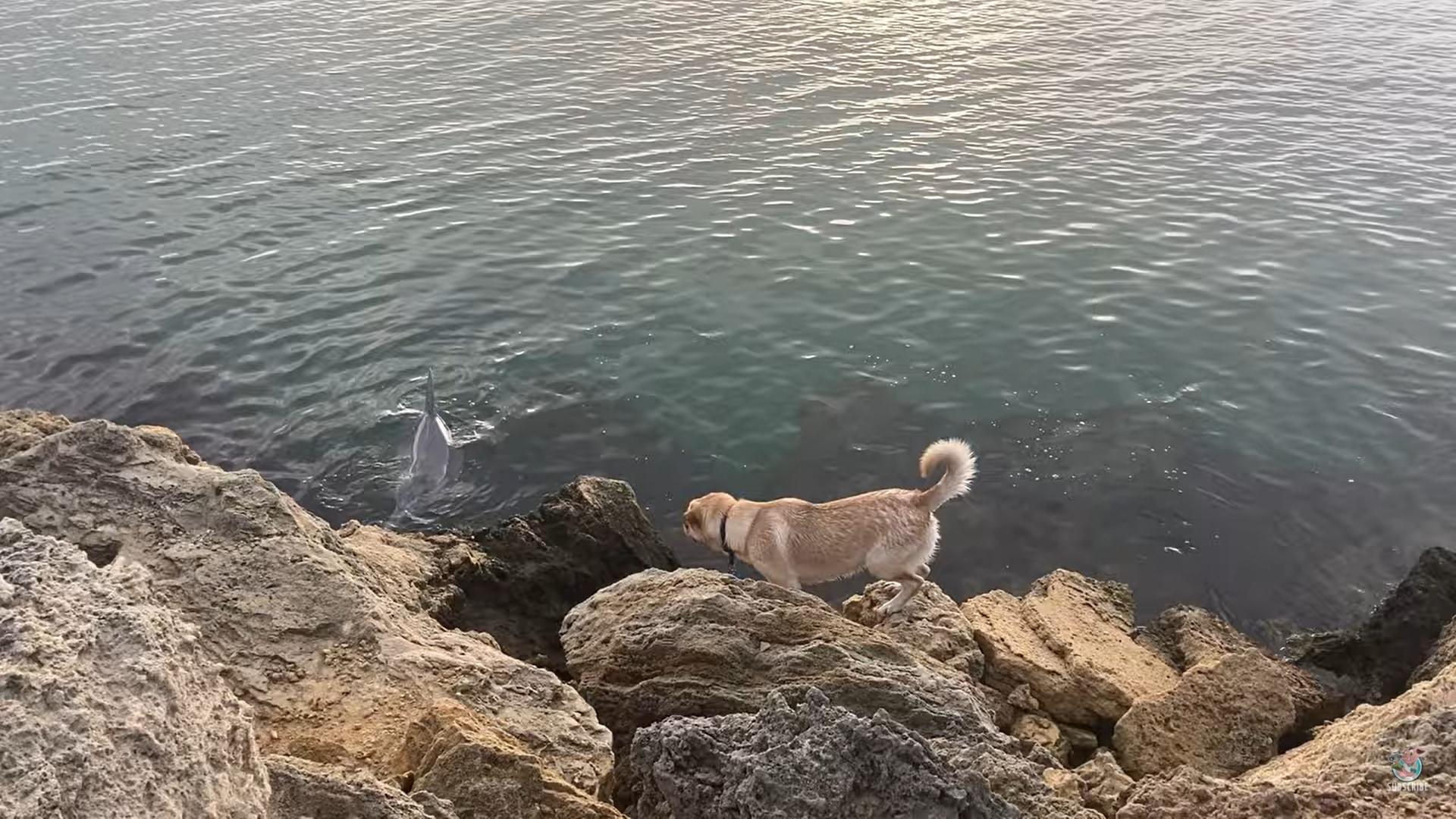 散歩中のワンコは、海岸である動物に出会いました