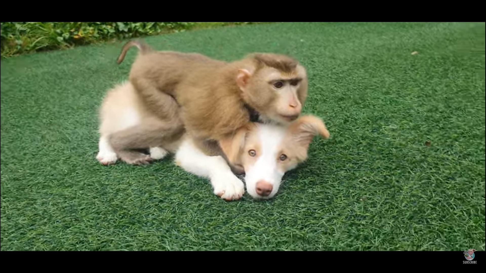 犬猿の仲とは一体・・・。ワンコが大好きなおサルさん!