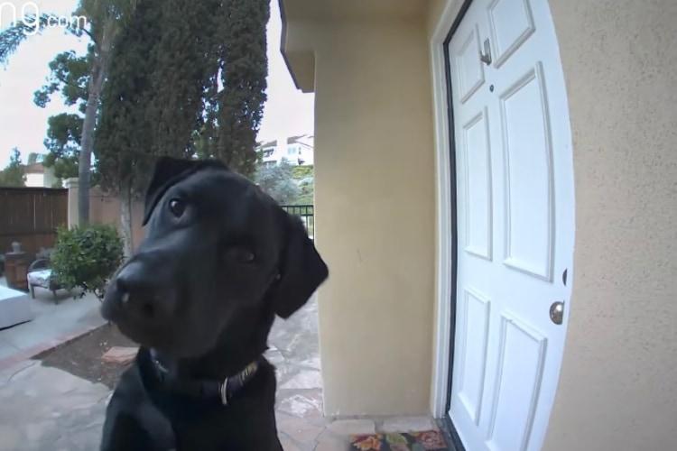 「どこにいるの??」飼い主さんの声はするけど姿が見えなくて不思議がるワンコがキュート!