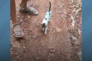カップルについて回って離れない人懐っこい野良の子猫。その後の展開が温かくて素敵!