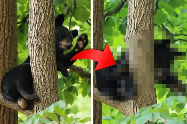 木の上で遊んでいたコグマちゃん、どんどんおネムになってきたようで・・・