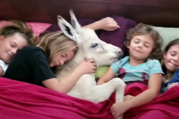人間のお姉ちゃんたちと赤ちゃんロバの、種を超えた仲良し姉妹にほっこり!