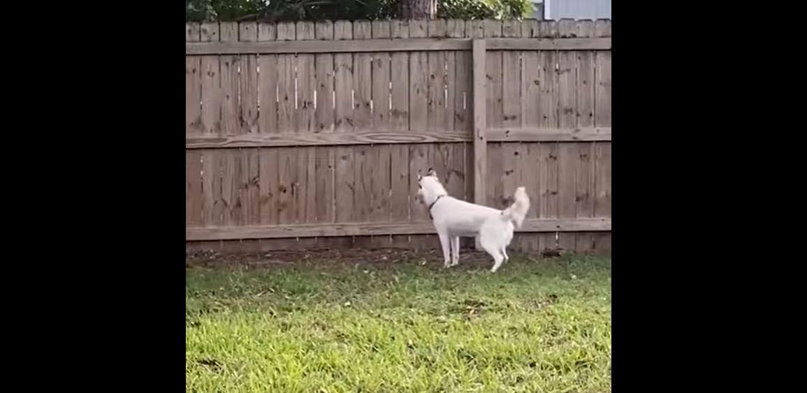 【何を言ってるのかわからないと思うけれど・・・】ハスキー犬を飼っていると思っていたんだけど、家で飼っていたのは実はシカだったみたいなんだ